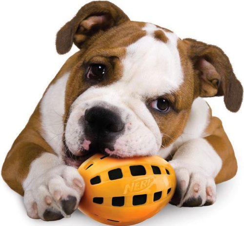 Nerf Dog TPR Crunchable Squeak Football 6-inch 4