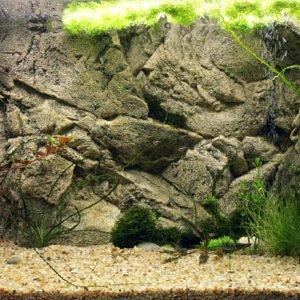 Freshwater Background