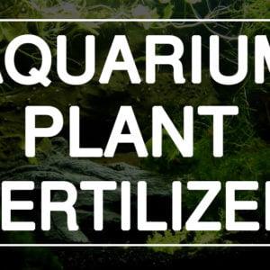 Planted Fertilizer