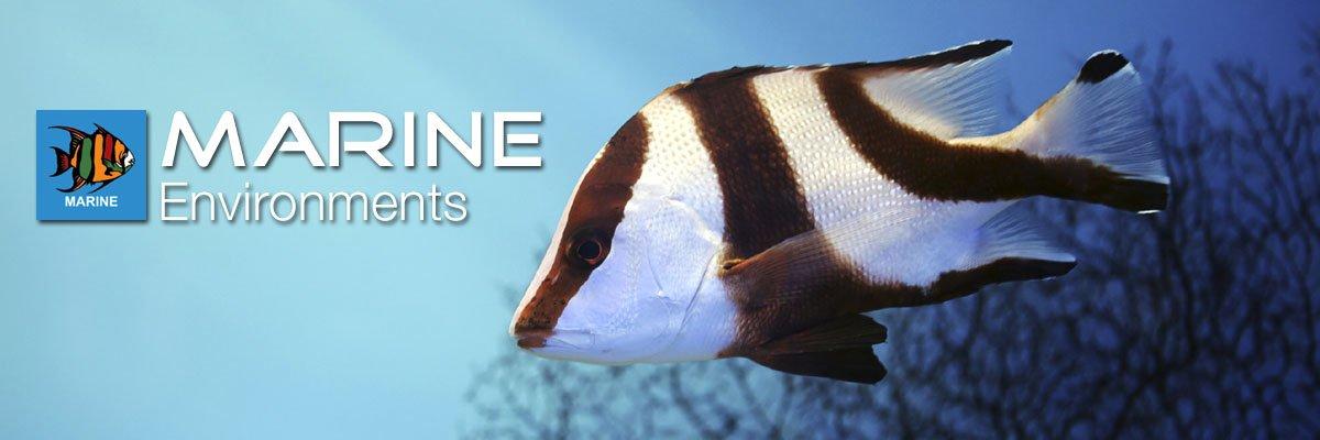 marinepure banner indiefur.com