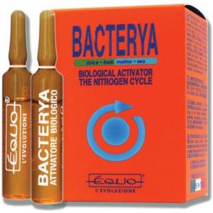 bacterya indiefur.com