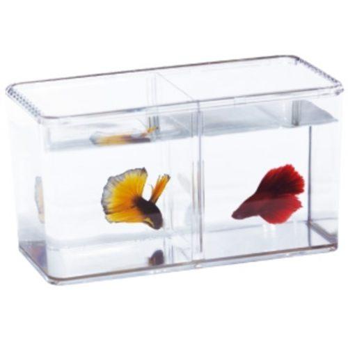 ISTA Betta Fish Double Display Case 1