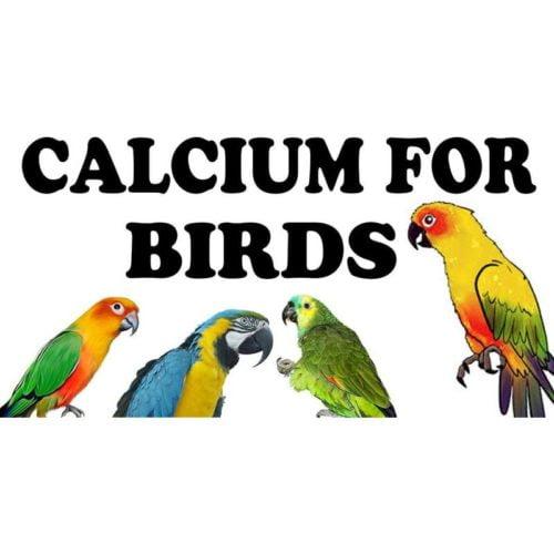 Pet Care International Calci-Grit 2