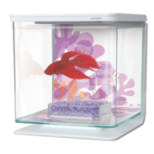 Marina Betta Kit - Flower Indiefur.com